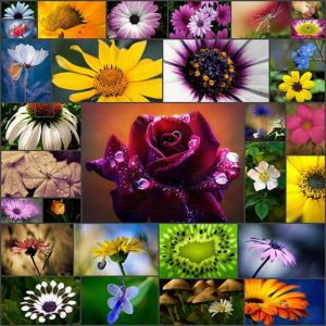 30-flower-macro-photography-collections